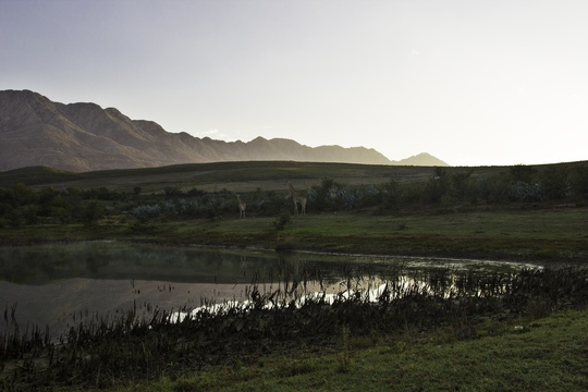 Wildlife Swartberg Private Game Lodge